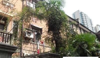静安户型,静安上海房价别墅,周边别墅,楼盘配套谷谷别墅平图片